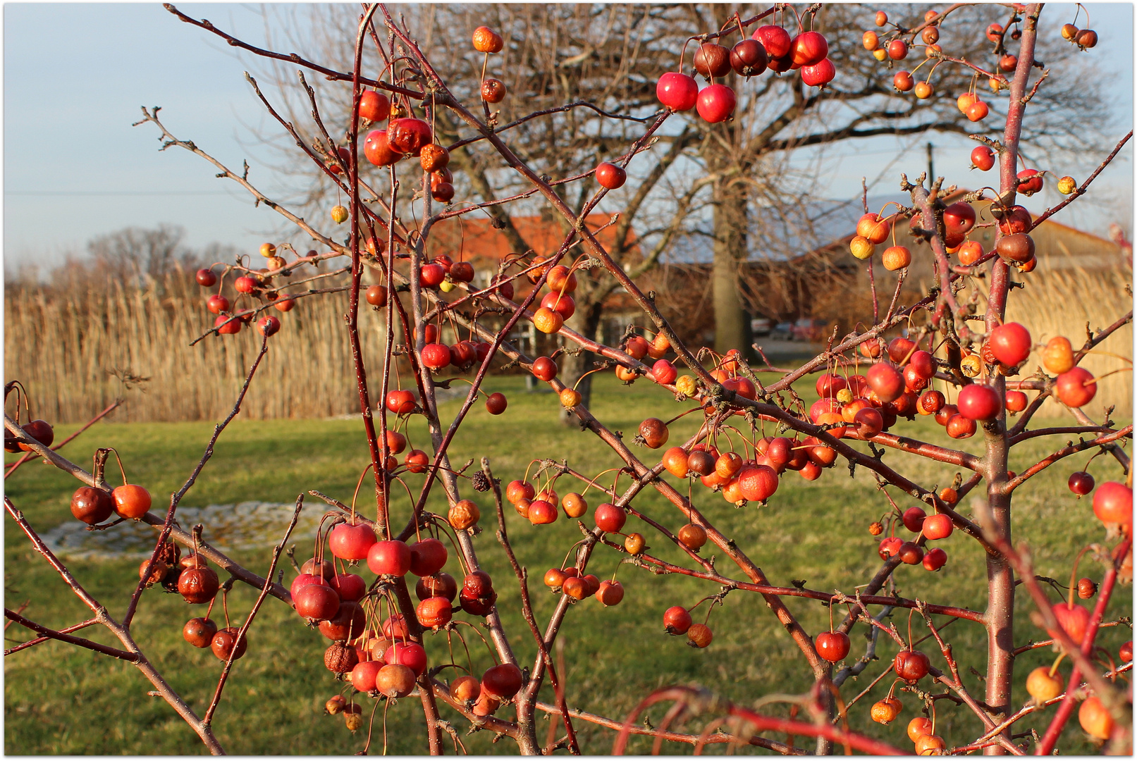 """Wintersonne"" im Januar 2014"