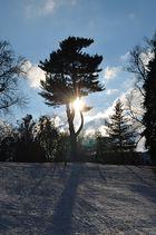 Wintersonne in Kassel