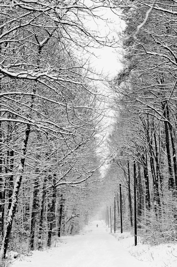 Wintersparziergang