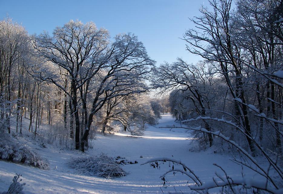 Winterspaziergang, 05.01.09 – 32
