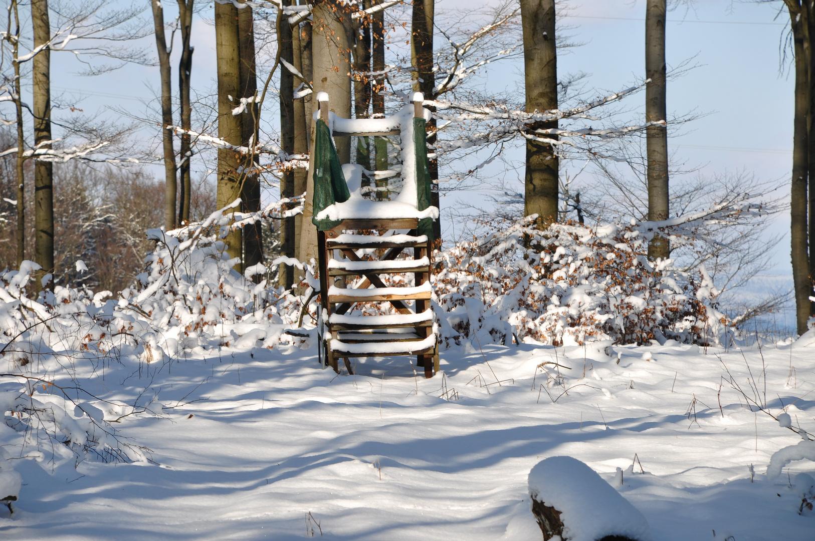 Winterspaziergang (2)