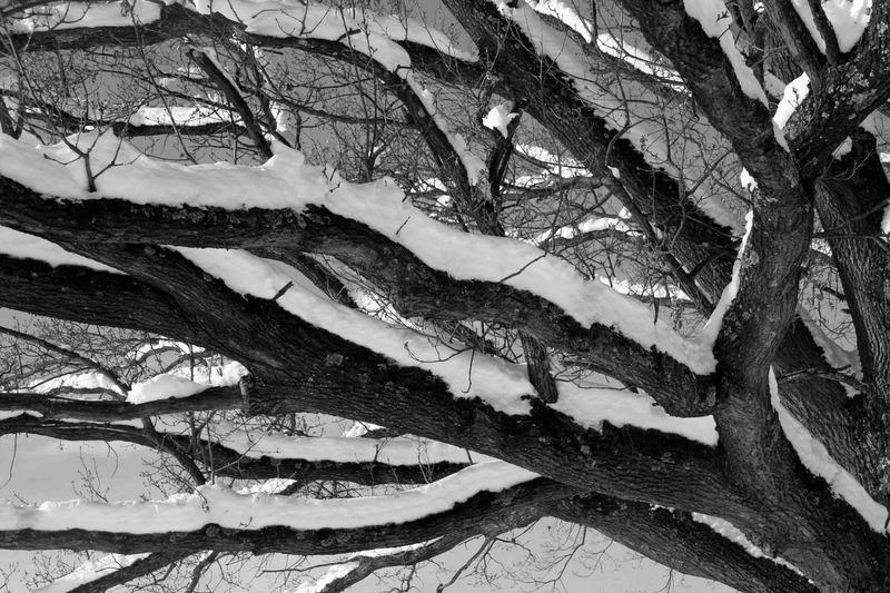 Winterspaziergang - 4
