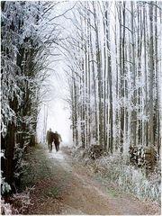 - winterspaziergang -