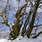 Winterspaziergang 8