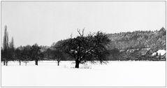 Winterspaziergang bei Cadolzburg