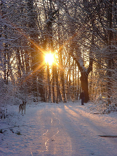 Winterspaziergang mit Herrchen