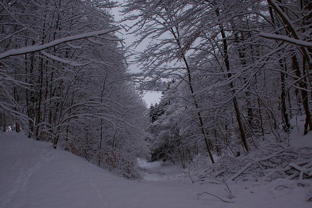 Winterspaziergang zur Kaltenburg