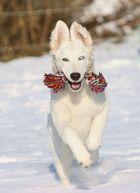 Winterspiele...