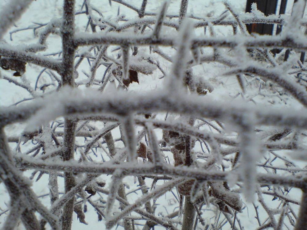 Winterspitzen