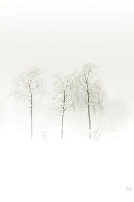 *** Winterstille ***