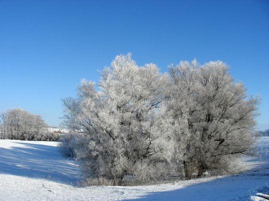 Winterstille... das hoffentlich letzte Bild vorerst!