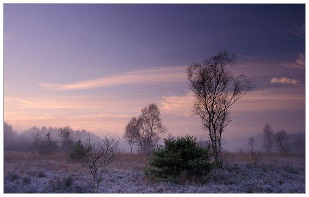 Winterstille im Moor