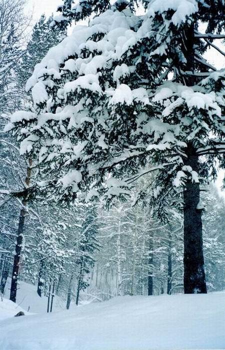 winterstille im Wald