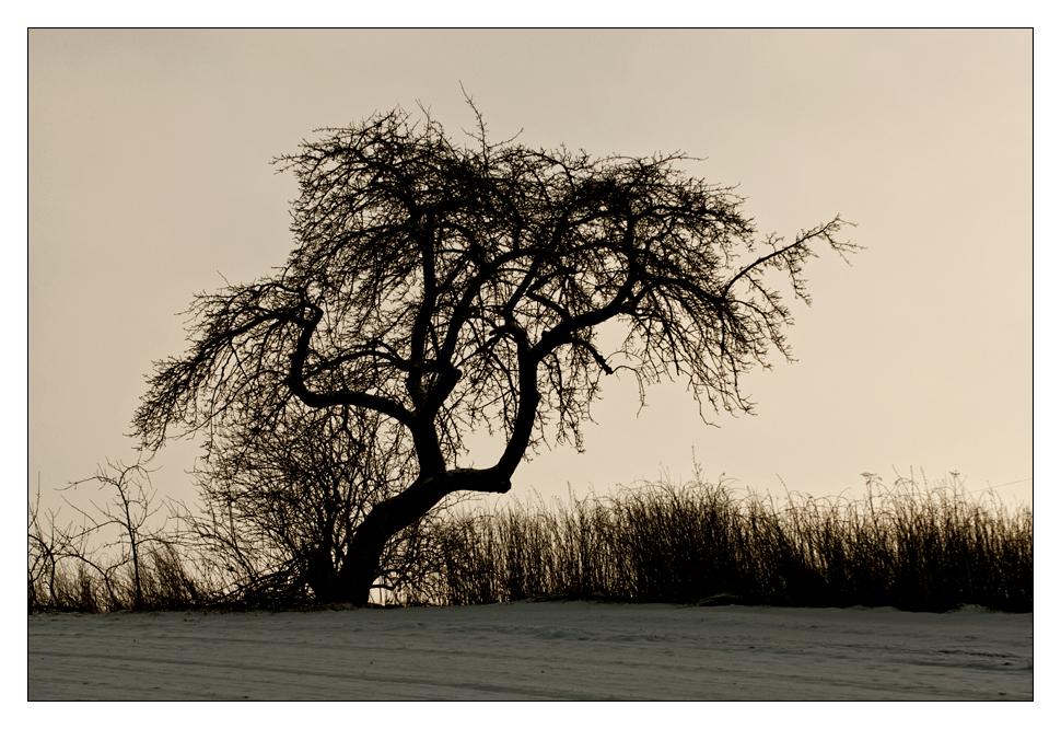 Winterstimmung III