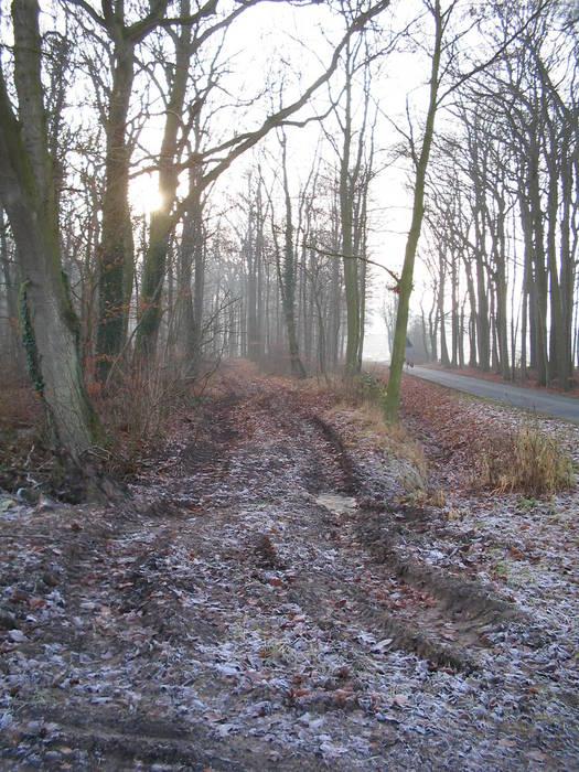 Winterstimmung ohne Schnee