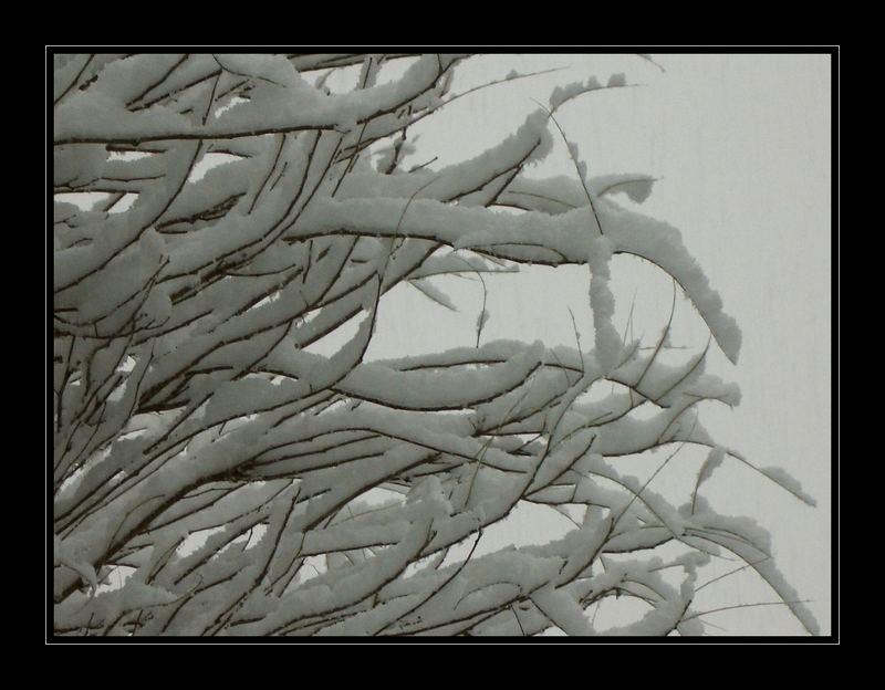 Winterstruktur