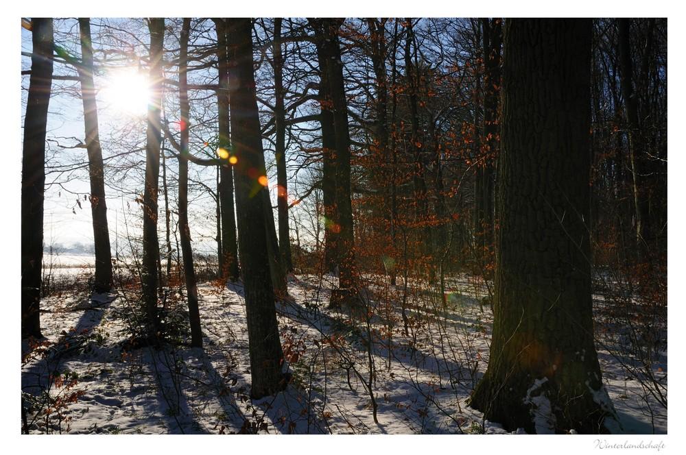 wintersuite (3)
