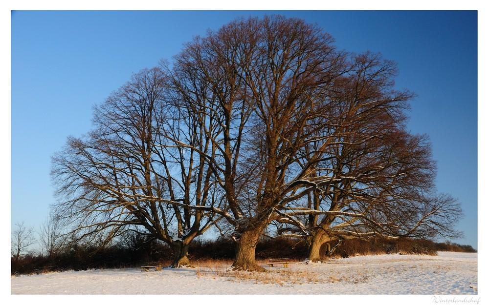 wintersuite (4)