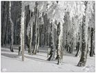 Wintertag 2