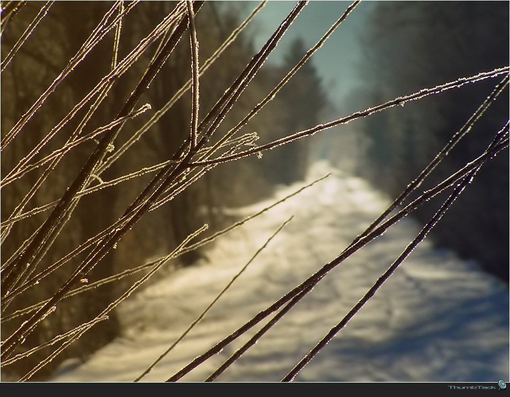* Wintertag *