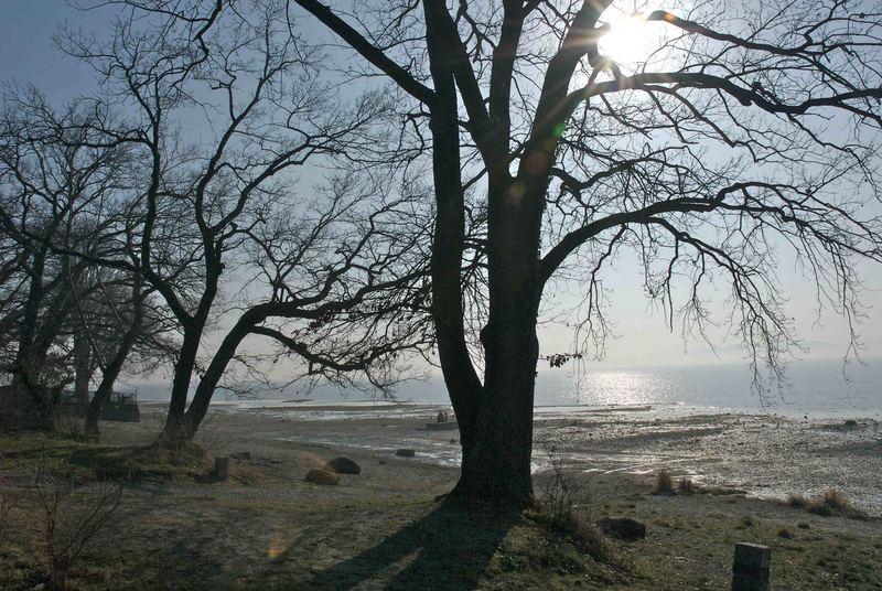 Wintertag am Bodensee II