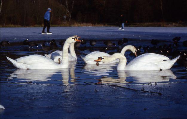 Wintertag am Rotbachsee in Hiesfeld