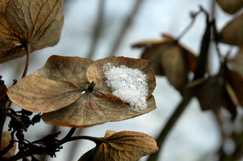 .........wintertime......