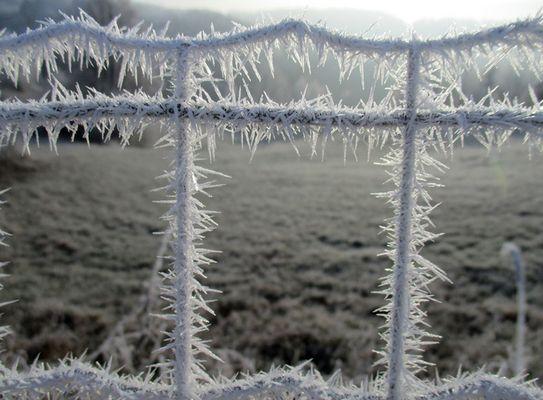 wintertime is coming 1 - vereister Zaun auf der Ries heute Morgen