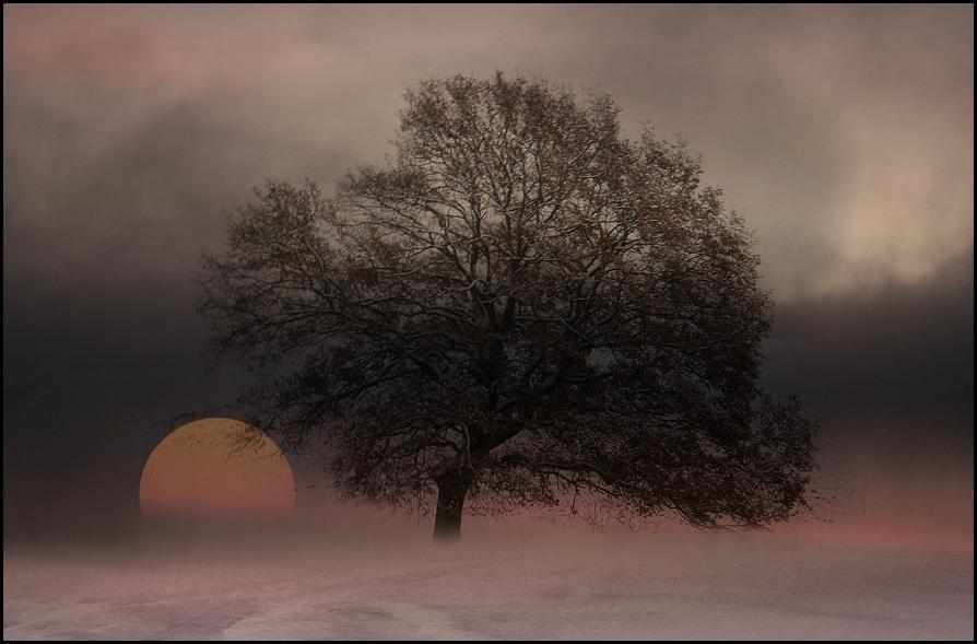 winterträume 2