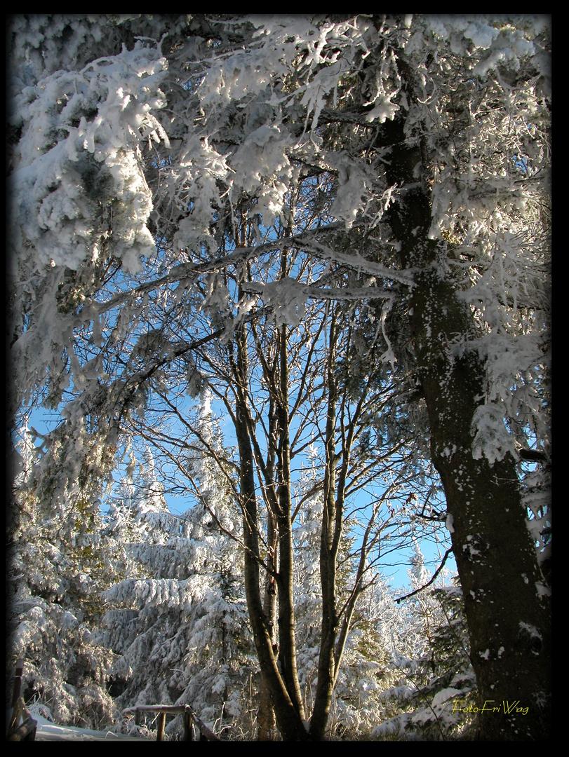 Winterträume...