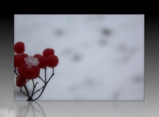 ...Winterträume
