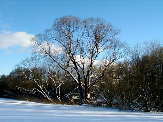 Wintertraum-1