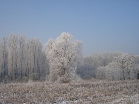 Wintertraum....
