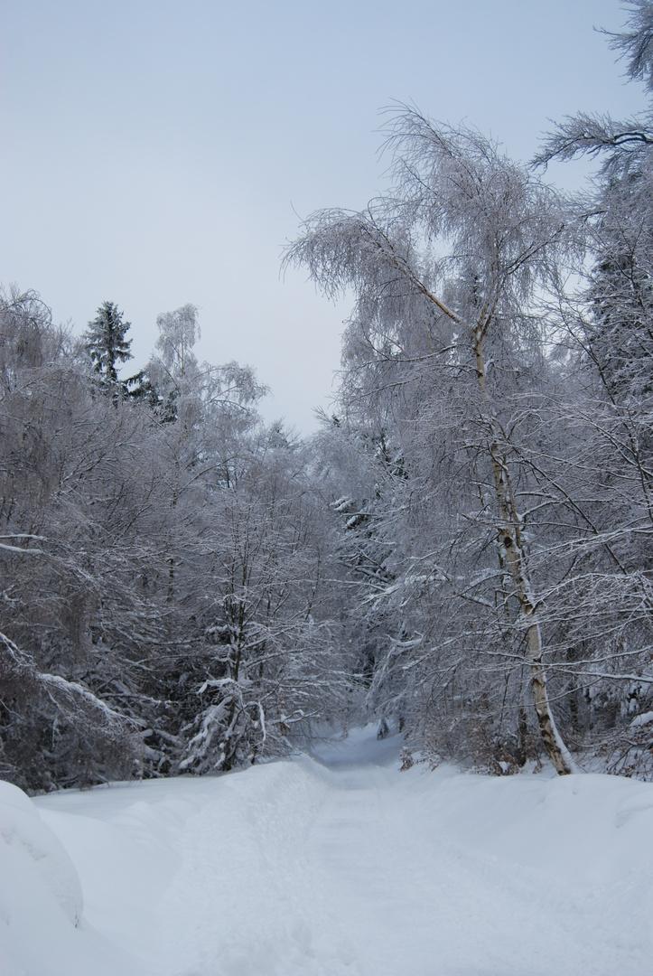 Wintertraum 3