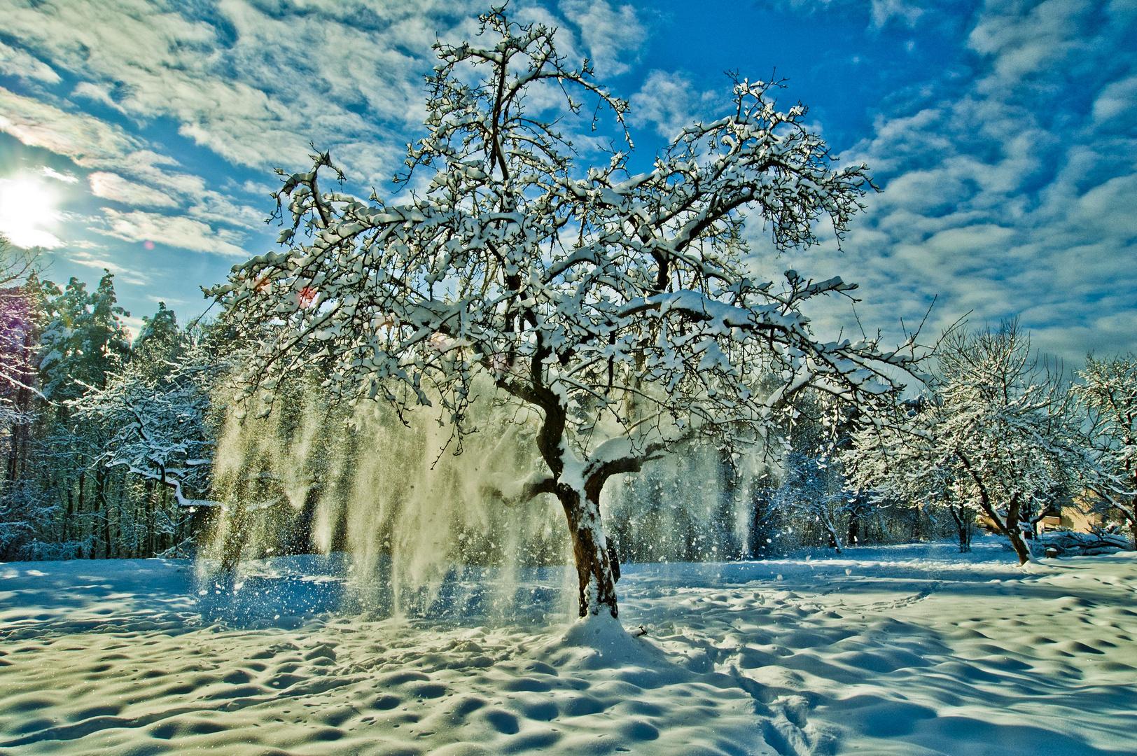 Wintertraumbaum