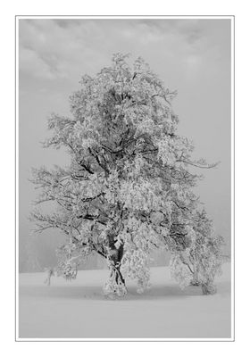 Wintertraum_reloaded II