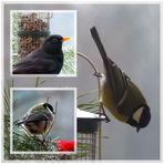 Wintervögel-Collage