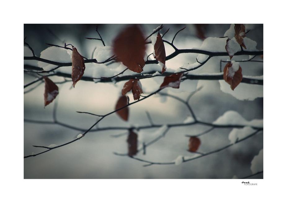 .winterwald.