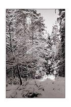 Winterwald [1]