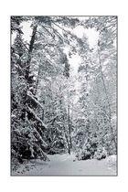 Winterwald [2]