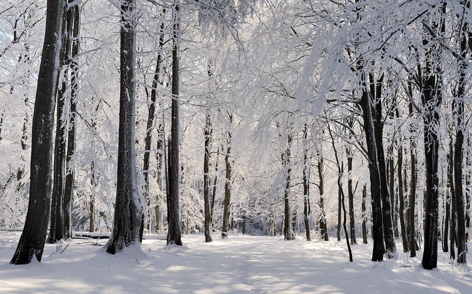 Winterwald foto bild world winter schnee bilder auf fotocommunity - Winterliche bilder kostenlos ...