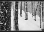 ___winterwald___