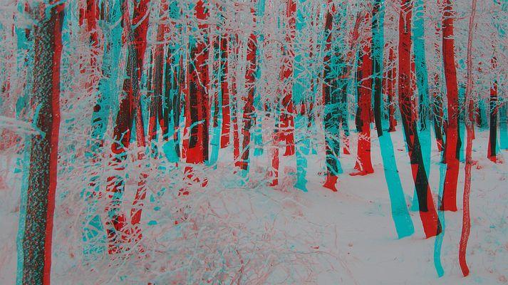 Winterwald (3D-Bildmit Rot/Cyan-Brille betrachten)