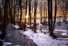 * Winterwald *