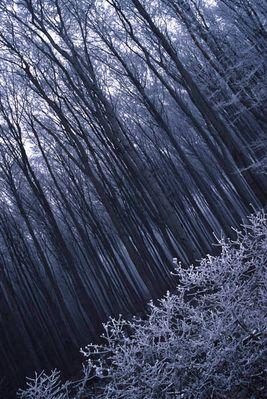 Winterwald