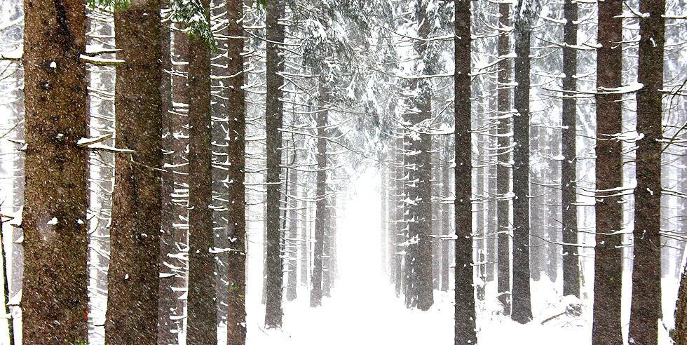 Winterwald am Feldberg am Taunus
