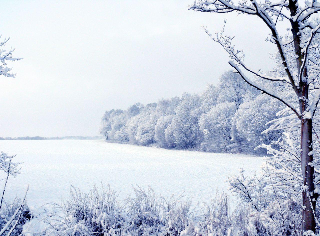 Winterwald auf Insel Rügen