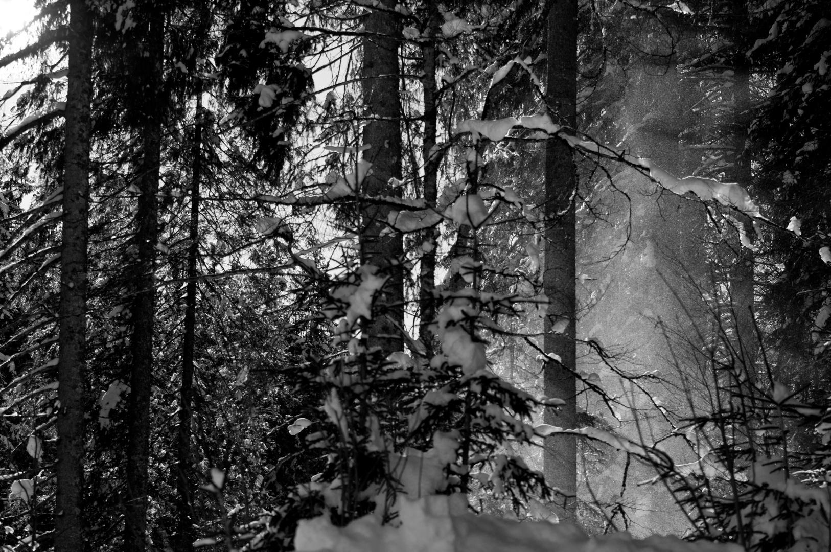 Winterwald......