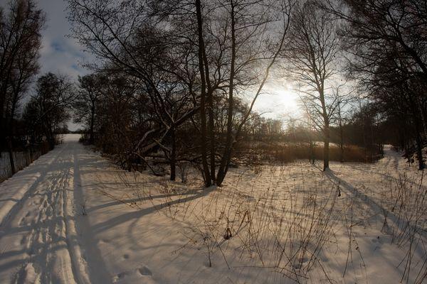 Winterwald bei Bad Düben