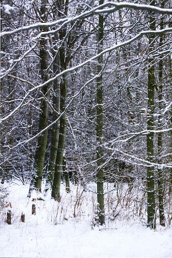 Winterwald - ein Versuch